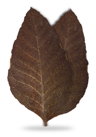 sopariwala_exports_indian_rustica_leaves_kkc_sc
