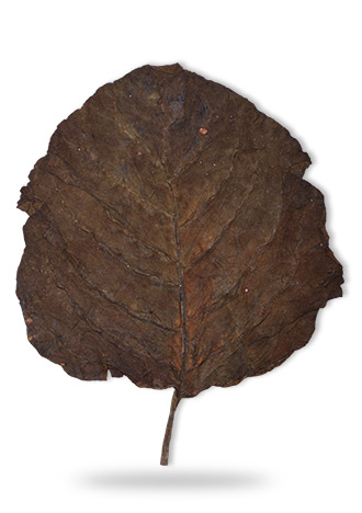 sopariwala_exports_indian_rustica_leaves_kkj_sc