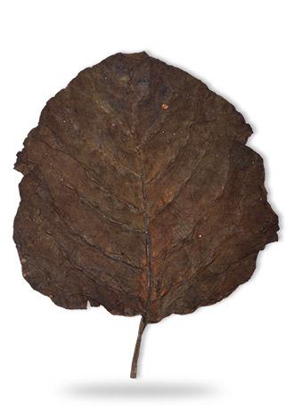 sopariwala_exports_indian_rustica_leaves_kkj_sc